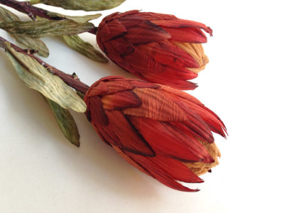 faux protea